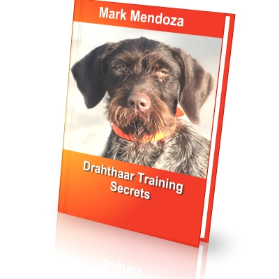 German Wirehaired Pointer Training Secrets - How To Train a German ...