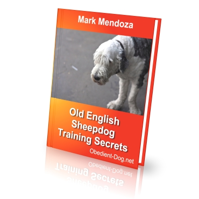 Old English Sheepdog Training Secrets - How To Train a Old