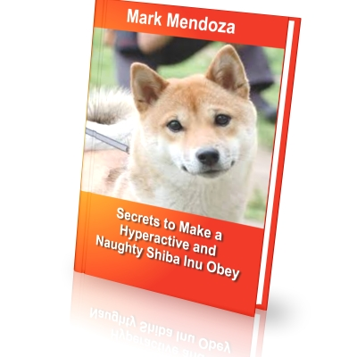 So, how DO you train a Shiba Inu?