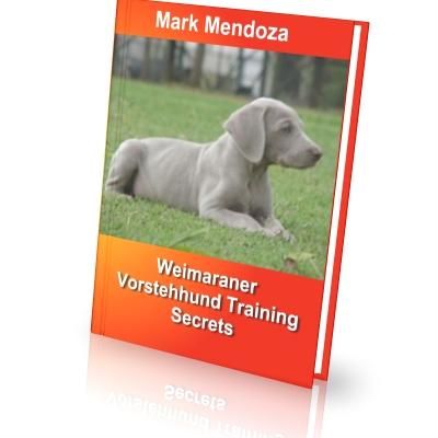 Find a Puppy: Weimaraner